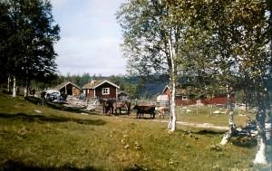 Setra i Galådalen, med den gamle Chevroleten og beitedyr. Foto fra tidlig på 60-tallet. Foto: Ola O. Øvergård.