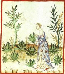 Kvinne som samler legende urter. Kilde: Wikimedia common